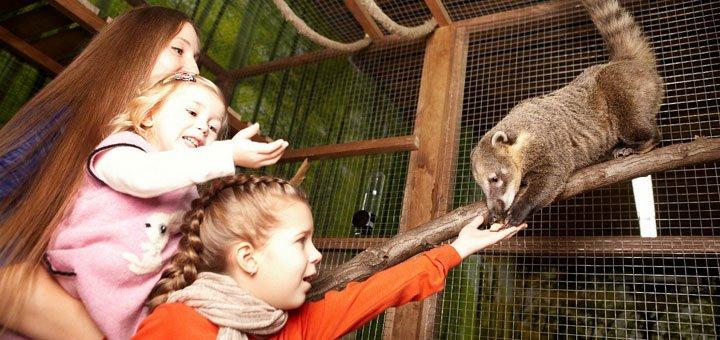 Скидка 36% на билеты в контактный зоопарк «Страна ЕНОТиЯ»