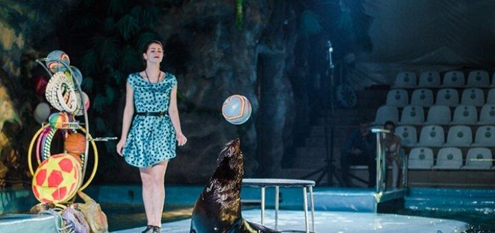Скидка 50% на романтическое шоу «LOVE» в дельфинарии «НЕМО»