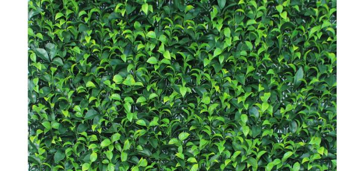 Скидка 6% на декоративное зеленое покрытие Самшит  от «Стиль Вкуса»