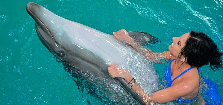 Скидка 50% на плавание с дельфинами в дельфинарии «Оскар» в Трускавце