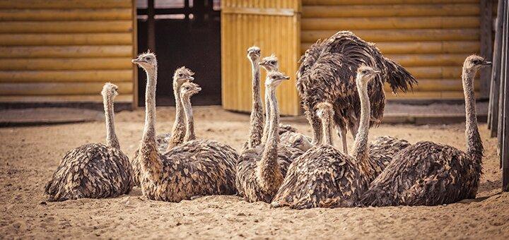 Билеты на экскурсию по контактному зоопарку и страусиной ферме «Долина страусов»